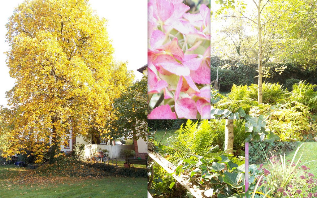 Herbstimpressionen aus dem Garten der Senioreninitiative in der Höchster Gebeschussstraße