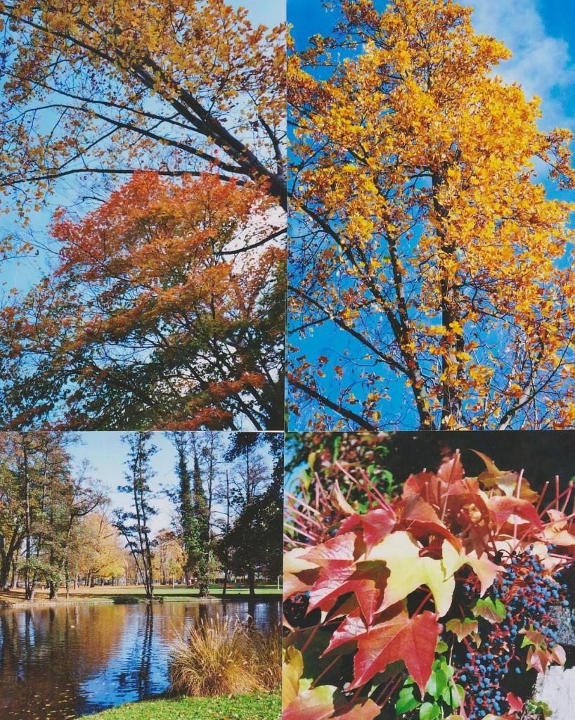 Herbstimpressionen aus dem Höchster Stadtpark