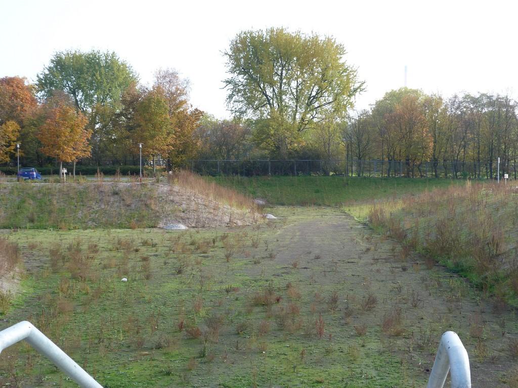 Versickerungsbecken westlich des Hortensienrings