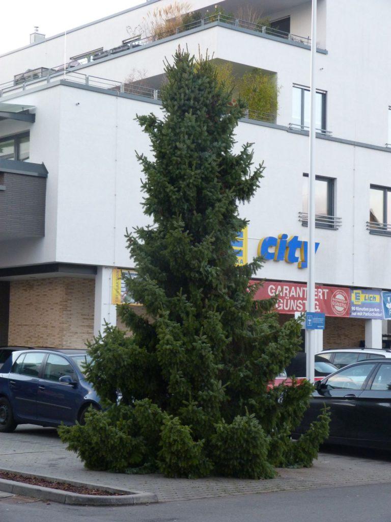 Weihnachtsbaum, Edeka City Lich