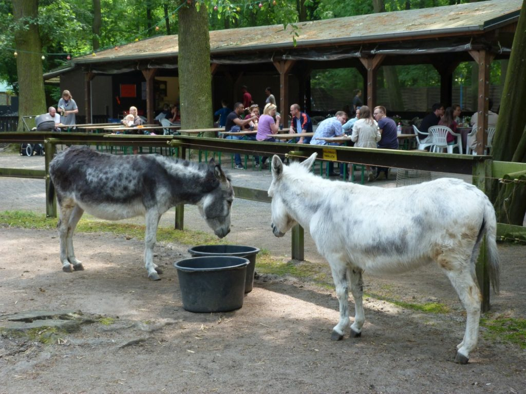 Esel im Kobelt-Zoo, Frankfurt am Main Schwanheim