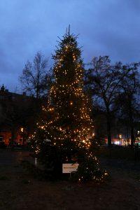 Weihnachtsbaum Dalbergkreisel