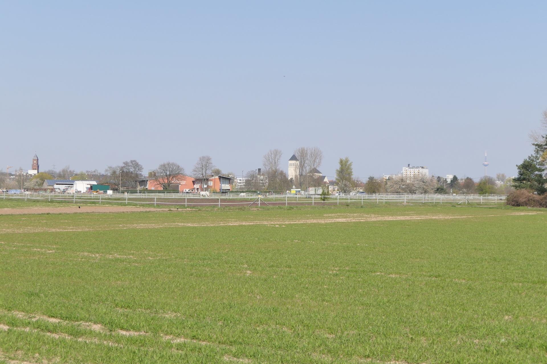 Schwanheimer Unterfeld