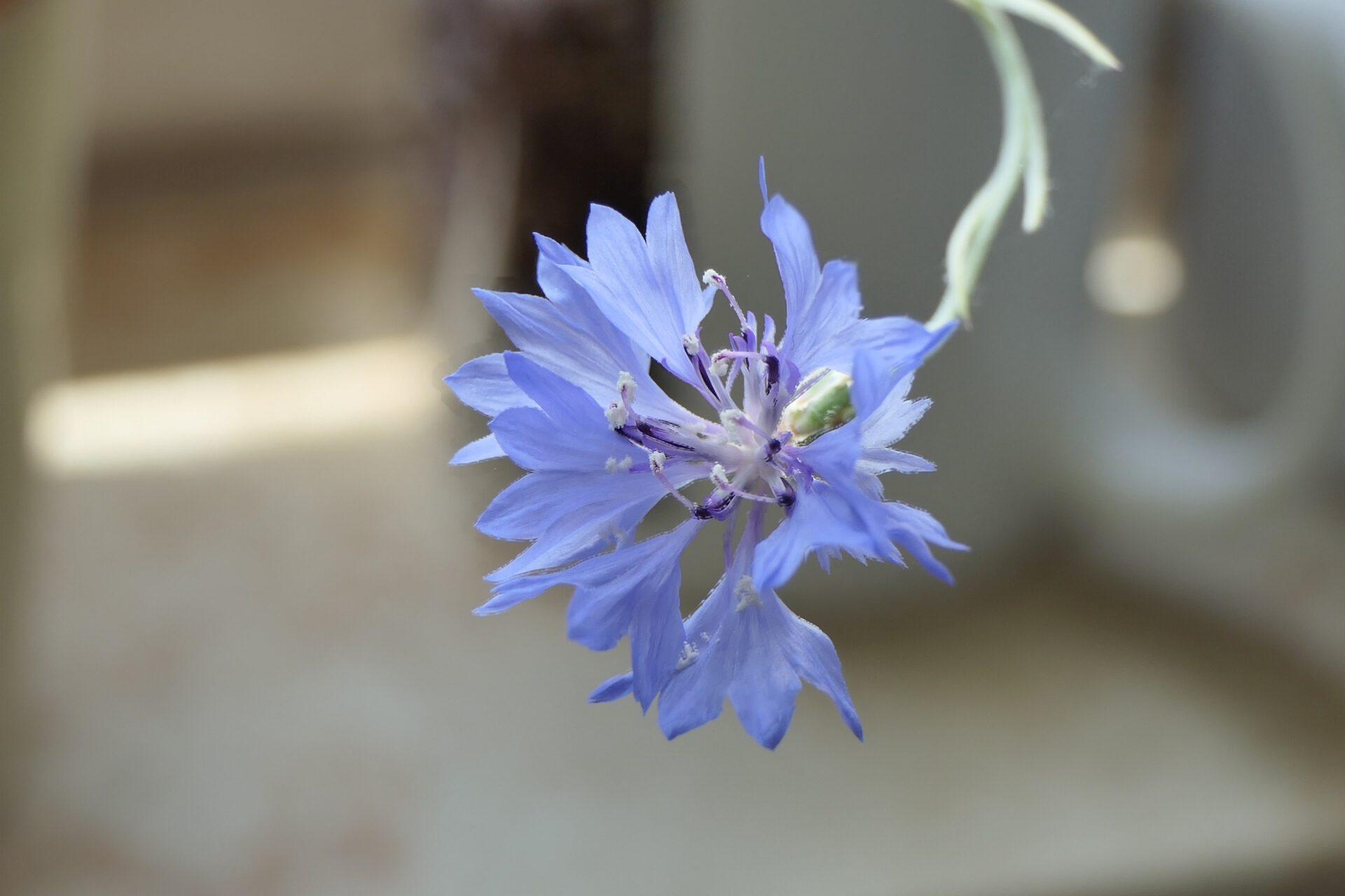 Blüte, Wiesen- oder Wildblume